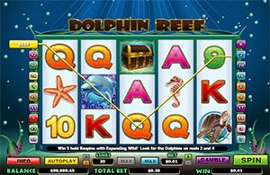 dolphin-reef2